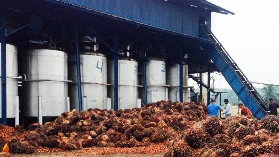 Keuntungan Menggunakan Sistem Otomatisasi Mesin Pada Pabrik Pengolahan Kelapa Sawit